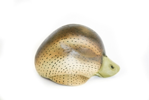 Black Duck Decoy Heads - HD-11-BDP