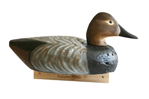 Cork Canvasback