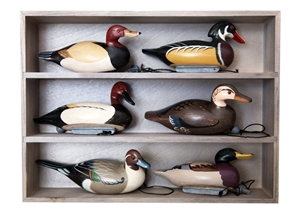 Decoy Shed Display